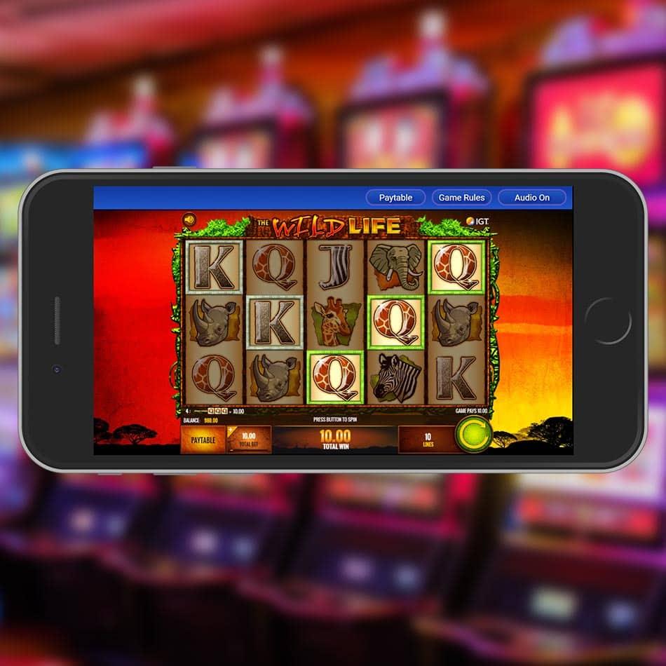 The Wild Life Slot Machine Win